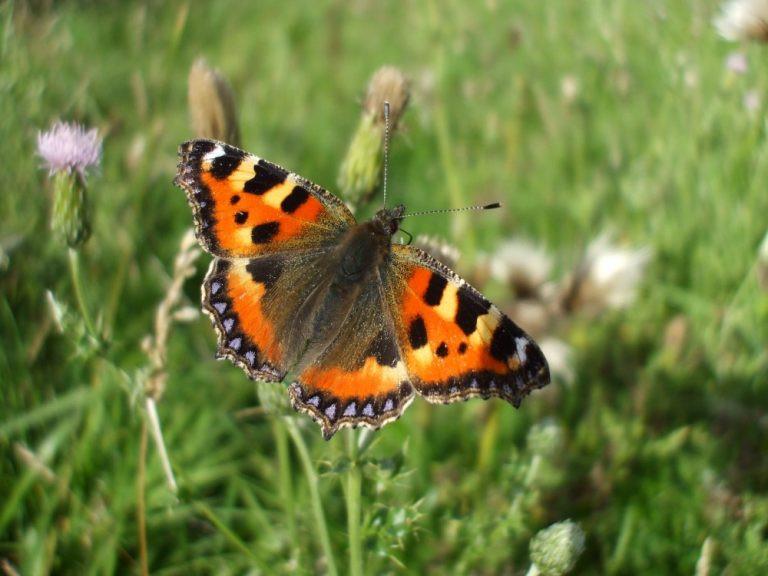 woodland butterfly-1-768x576.jpg