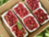 Raspberries_Cusgarne.jpg