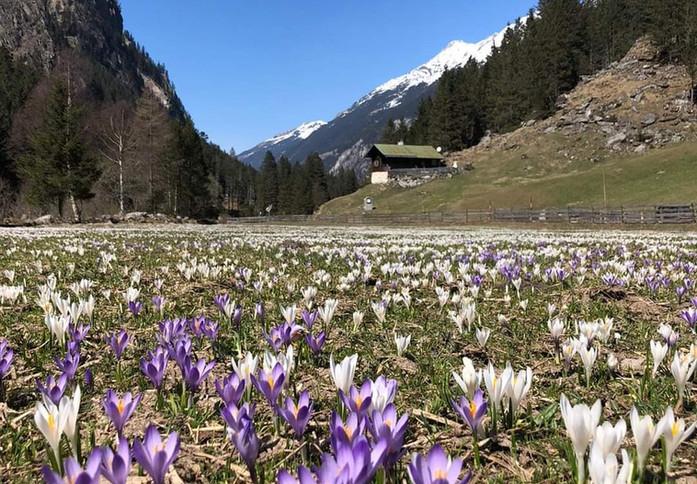 Zollhütte www.berghuetten-mieten.ch