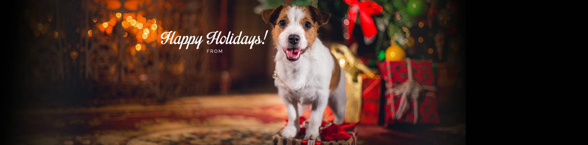 Dog Walker Dallas & Pet Sitter Dallas