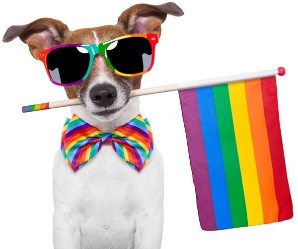 Dallas gay dog walker