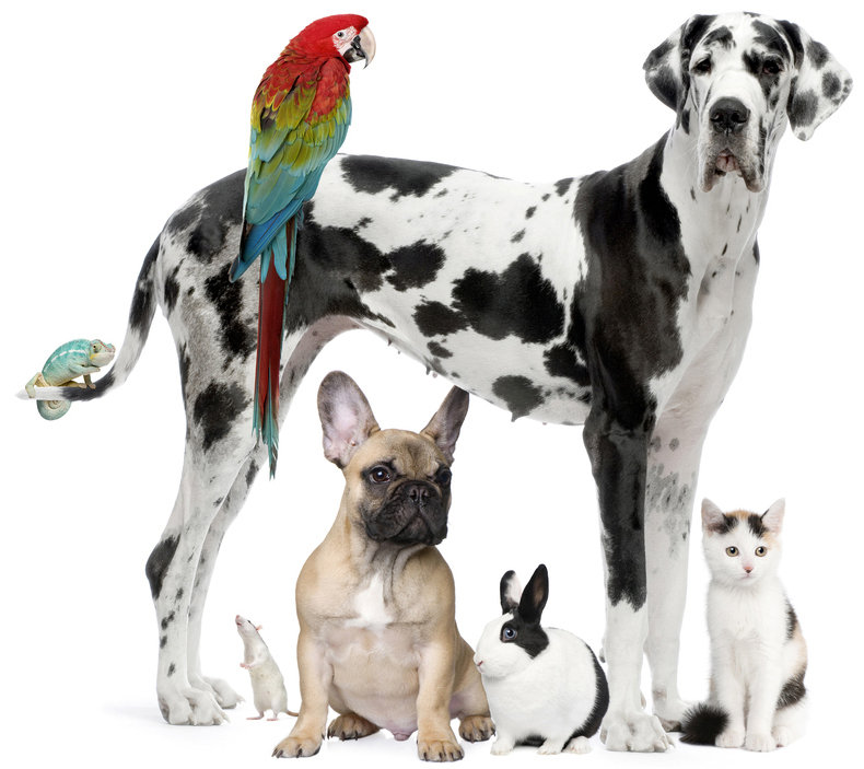 pet sitting service in NYC