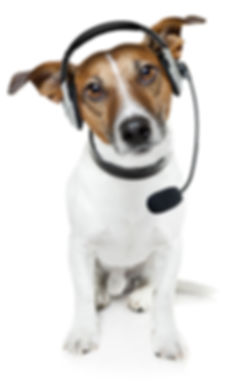 dog walker & pet sitter, Dallas Texas