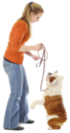 NYC dog walking jobs