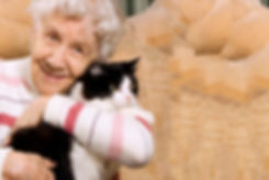 nursing home cat sitter