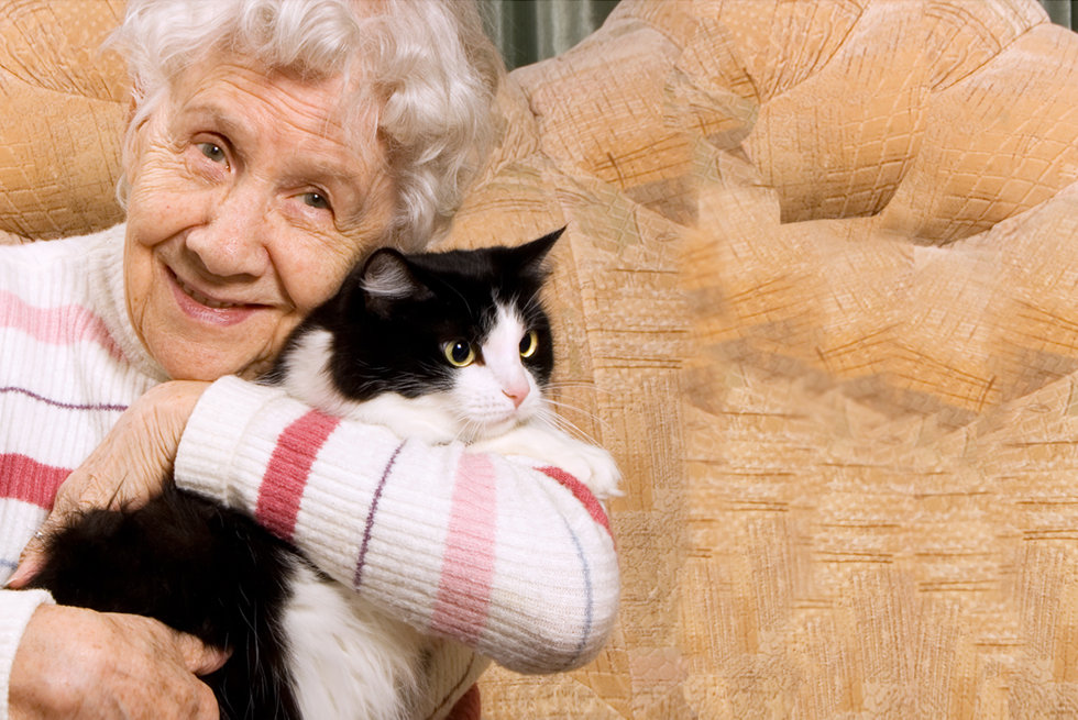 nursing home cat sitter