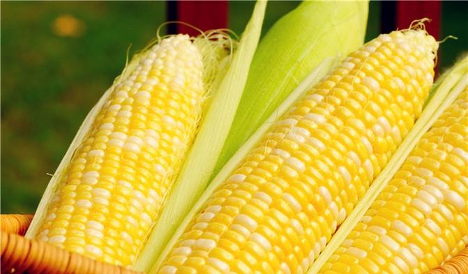 Enjoying Corn Raw