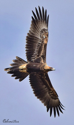 Mighty Eagle 1 ;)