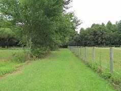around the farm aug 2015 024.JPG