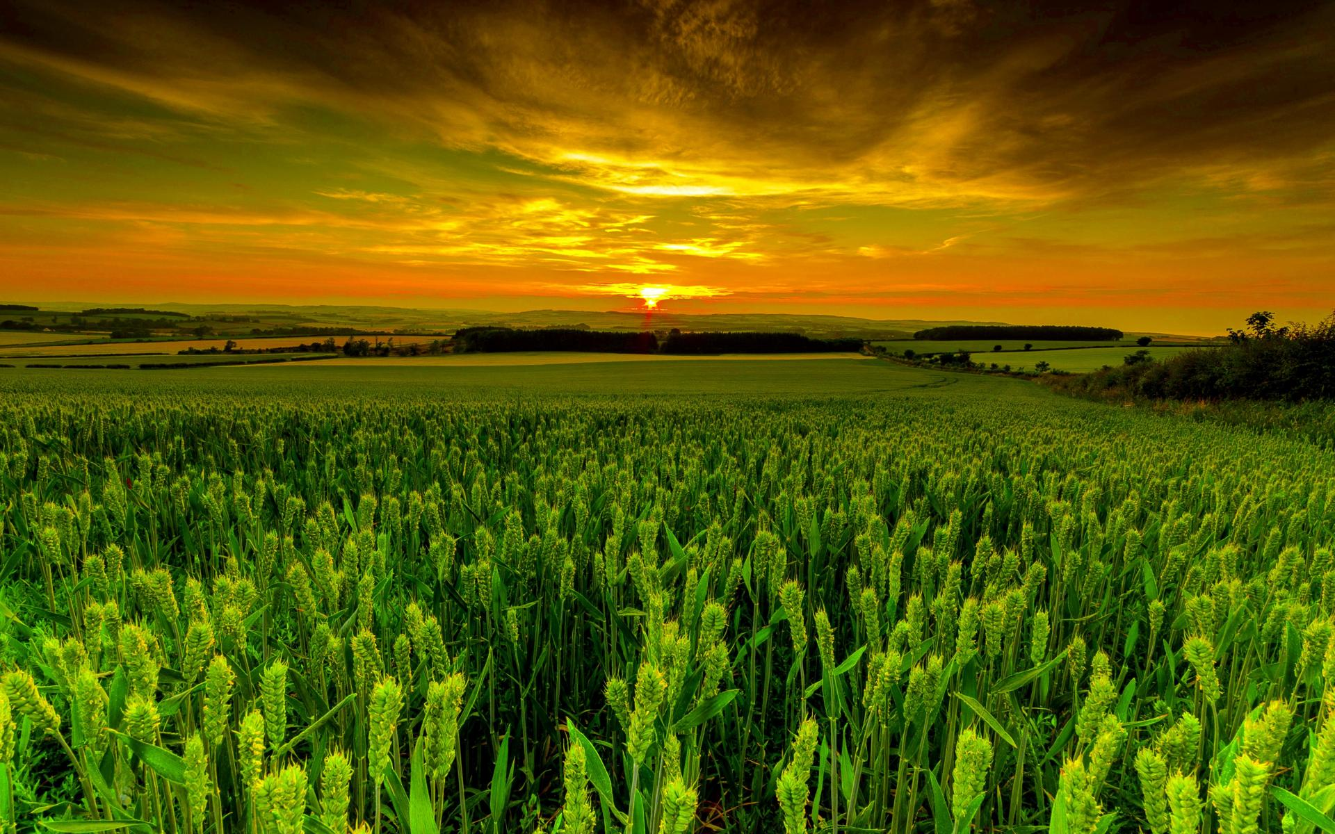 1920x1200_wheat_field_at_dusk-1536053.jpg