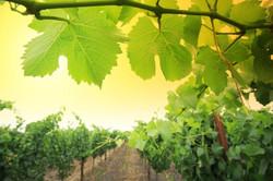 wine-8.jpg