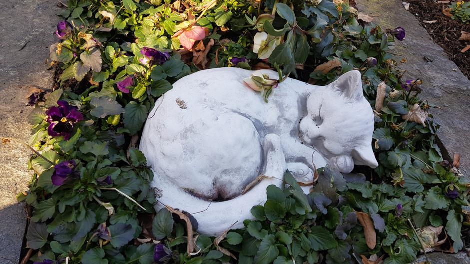 Katze auf Grab.jpg