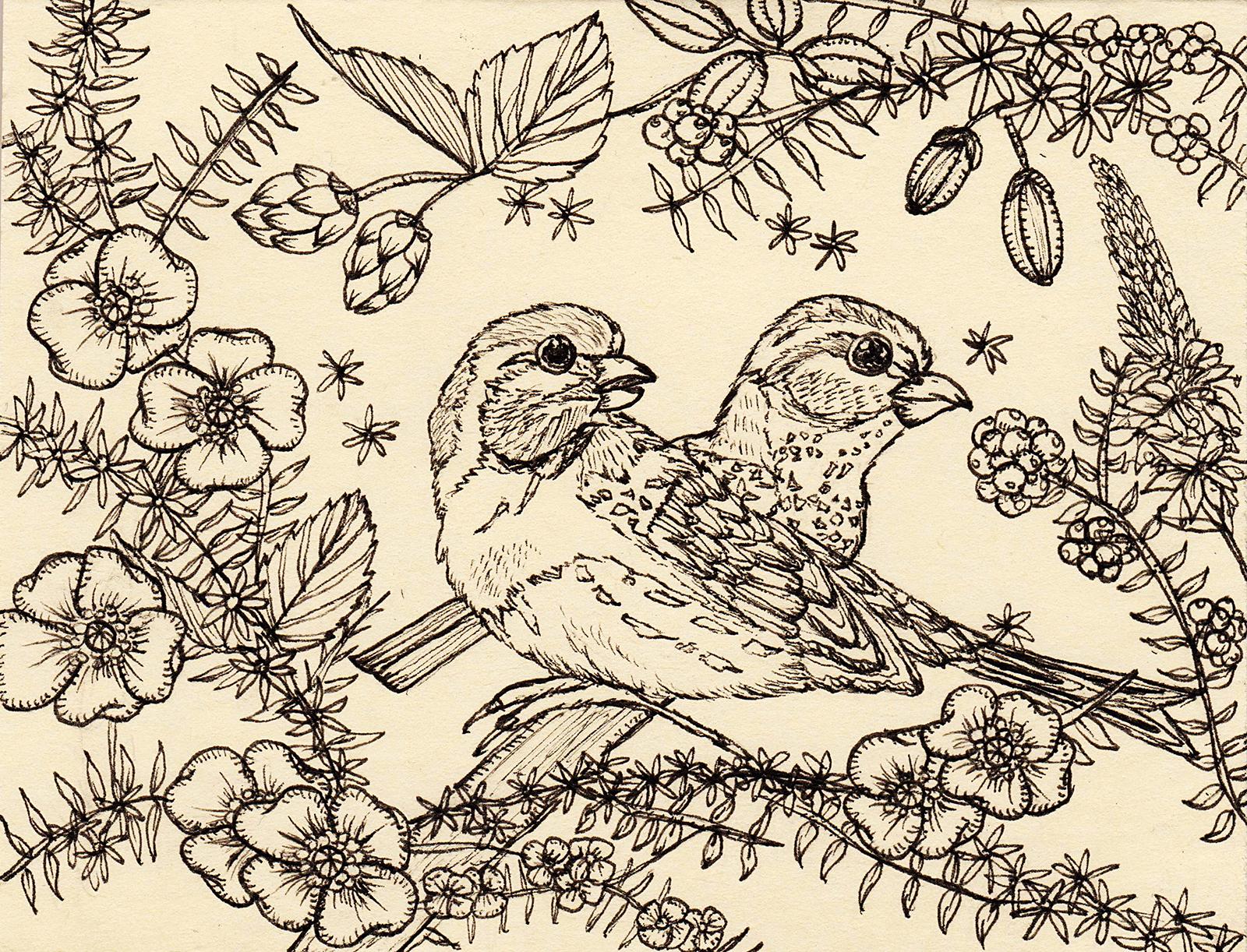 Love Birds3