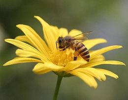 Bee Keepers.jpg