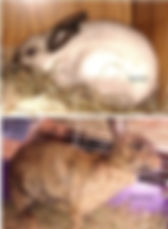 Rabbits from ontario case.jpg
