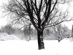 4_Winter_Meditation.jpg