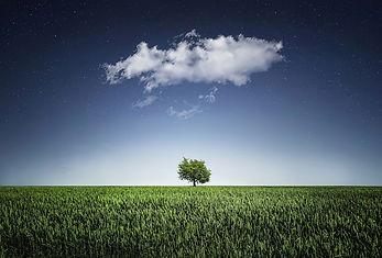 Bessi tree-736887_1280.jpg