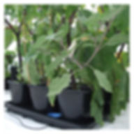 Auto_9_XL_Plantasia_2_Web.jpg
