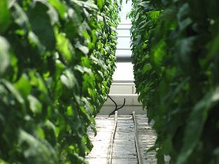 Quartzia greenhouse-430427_1280.jpg