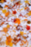 Snow-Mt-fall-leaves-under-dusting-of-sno
