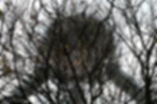AtomiumTrees.jpeg