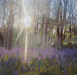Debbie Farrell - Sunlight Throught the Bluebells
