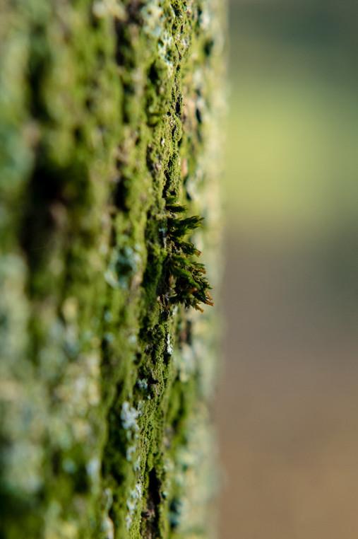 Aimee Kirkham - Nature Reclaiming