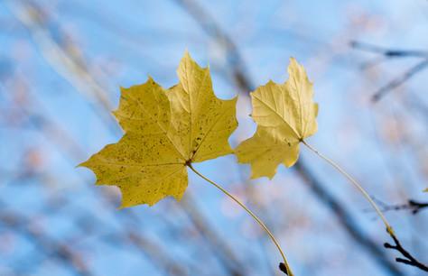 Aimee Kirkham - Autumn Leaves