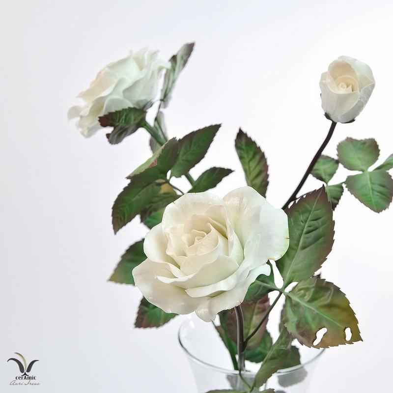Porcelain peach rose