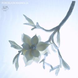 Porcelain magnolia