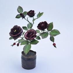 Burgundy black rose
