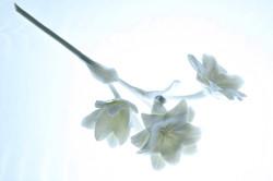 White porcelain campanula