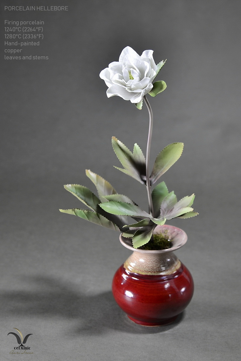 Porcelain white hellebore