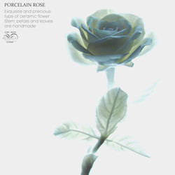 Porcelain rose white