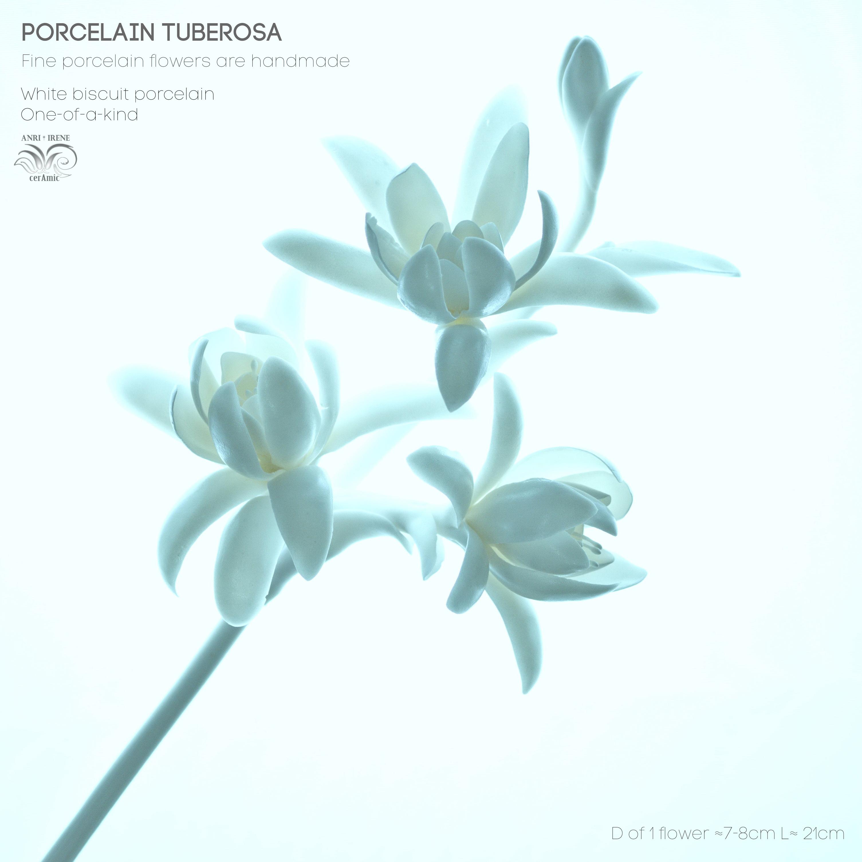 Porcelain flower tuberosa