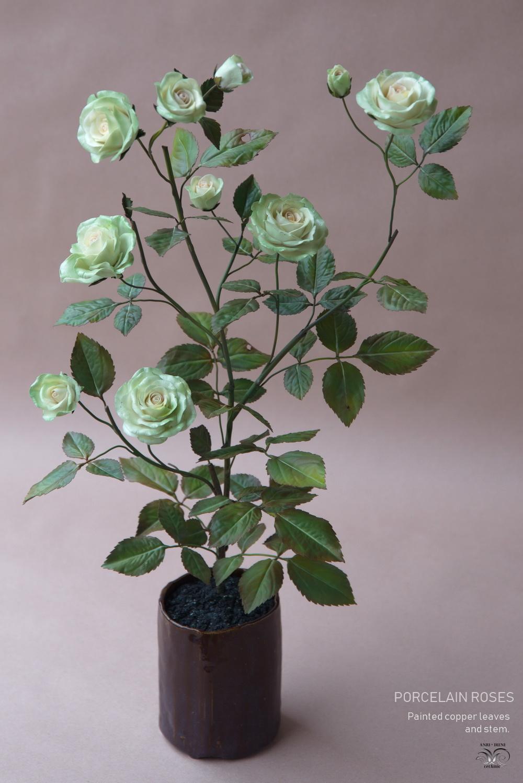 Roses of porcelain