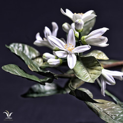 Porcelain citrus flowers