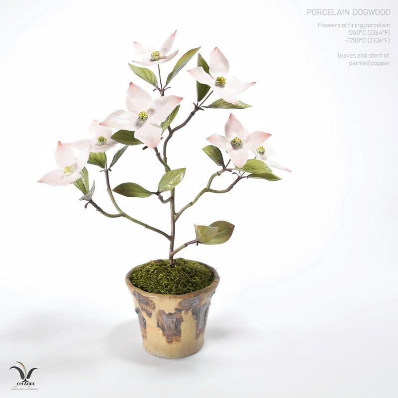 Porcelain flower dogwood