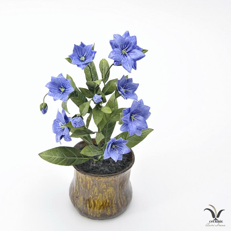 Porcelain blue campanula