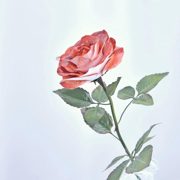 Ceramic rose, porcelain