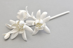 Porcelain flower tuberose