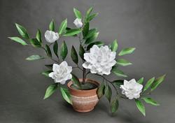 Porcelain white camellia