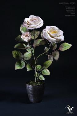 "Porcelain roses ""Sweet kiss"""