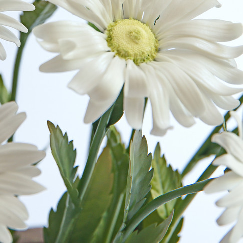 Porcelain daisy, copper leaves