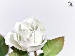 Porcelain white rose