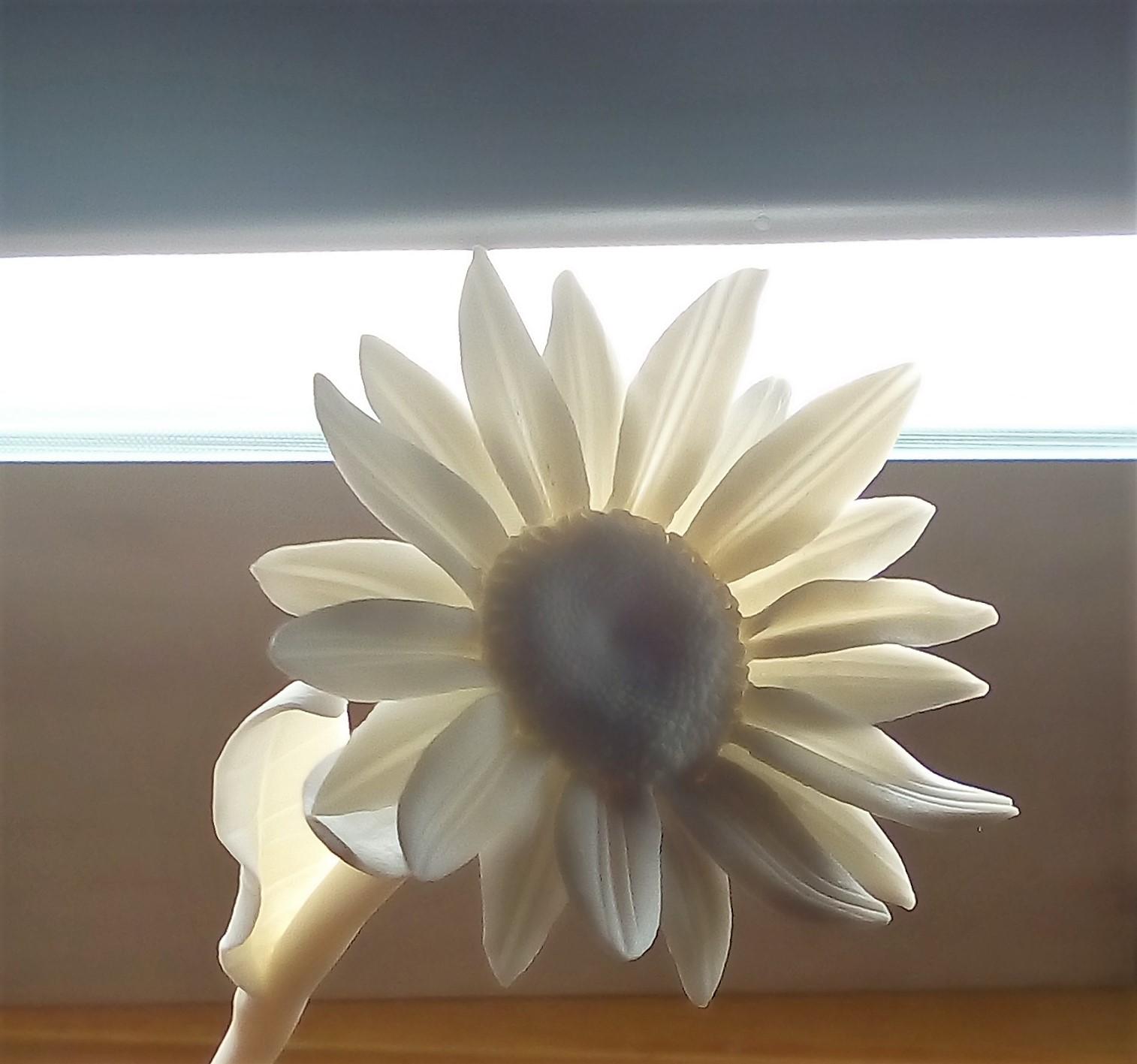 Porcelain daisy flower