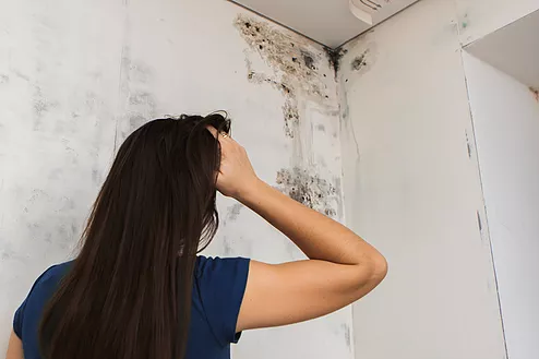 mold in Korea, how to deal with mold