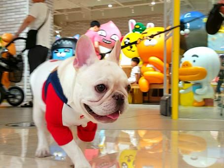 Dog Friendly Mall Near Seoul