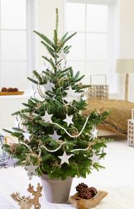 Christmas tree in Korea