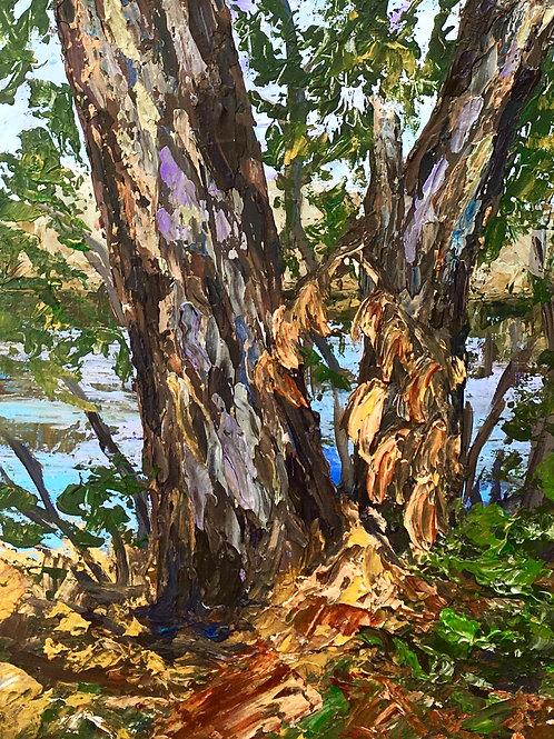 Trees of Secret Lake